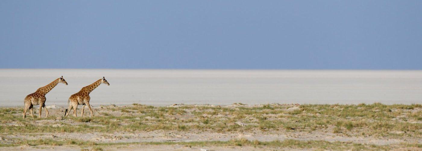 African Photo Safari in Etosha National Park, Namibia