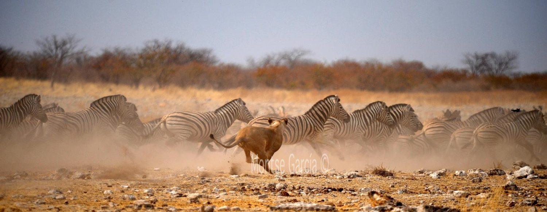 Northern Namibia safari