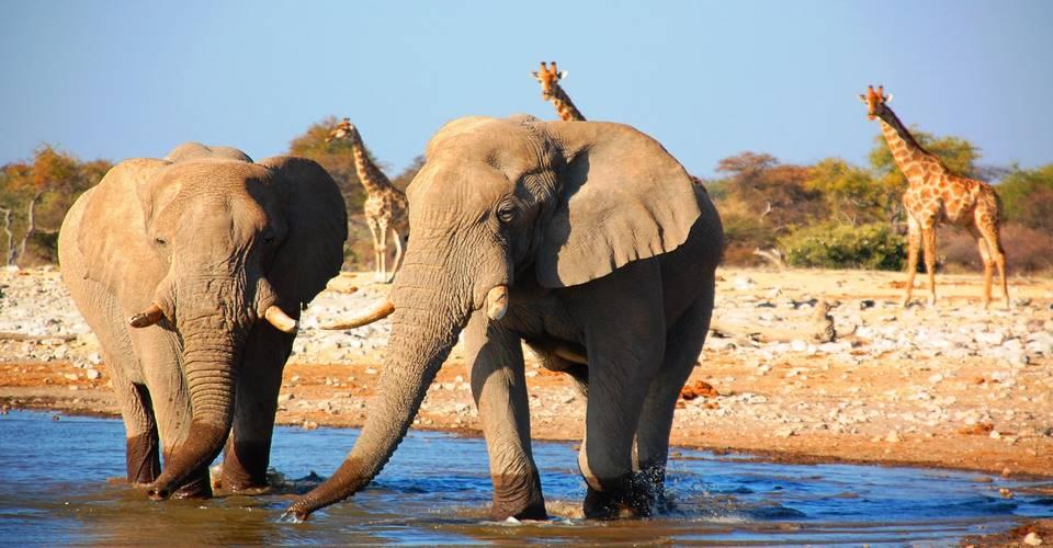 Etosha camping safari