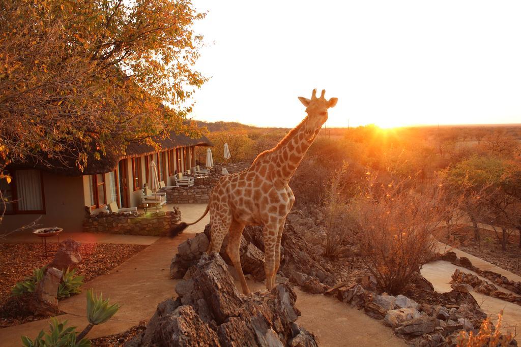 Okutala Etosha Lodge Rates
