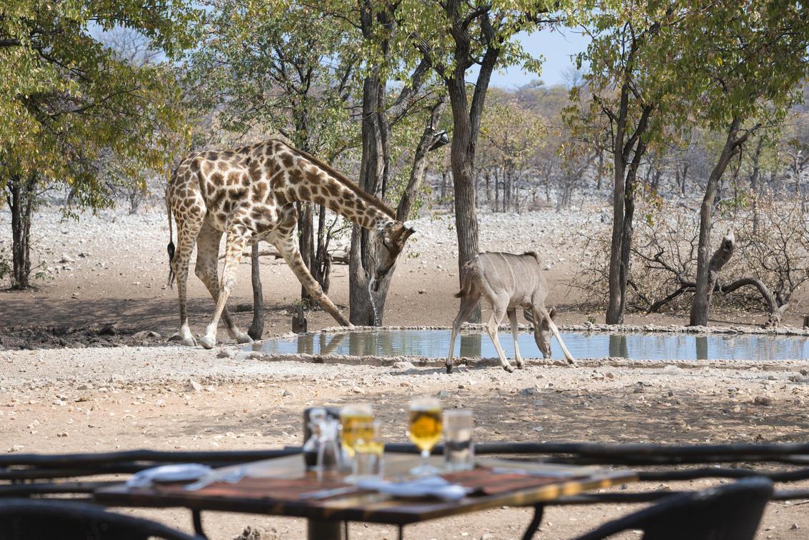 Ongava near Etosha National Park